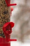 Alimentez les oiseaux Photos stock