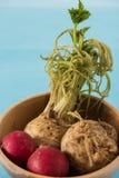 Alimenti crudi del sedano e rossastri con fondo blu Fotografia Stock Libera da Diritti