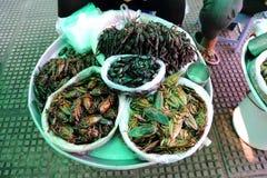 Alimenti dell'insetto fotografia stock