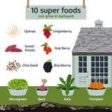 10 alimenti eccellenti possono svilupparsi in cortile, vettore infographic dell'alimento Fotografia Stock Libera da Diritti
