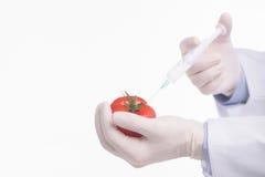 Alimenti geneticamente modificati Fotografia Stock
