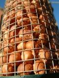 Alimenti gli uccelli Fotografie Stock Libere da Diritti