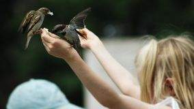 Alimenti gli uccelli Fotografia Stock