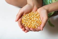 Alimenti l'affamato Fotografia Stock Libera da Diritti