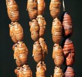 Alimento asiático de la calle: Gusanos de seda fritos Foto de archivo