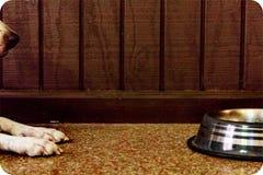 Alimento aspettante del cane in ciotola Fotografie Stock Libere da Diritti
