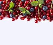 Alimento azul e vermelho em um branco Mirtilos maduros e corintos vermelhos em um fundo branco Bagas misturadas na beira da image Foto de Stock Royalty Free