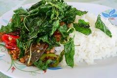 Alimento básico Tailândia, manjericão Imagem de Stock