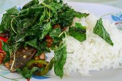 Alimento básico Tailândia, manjericão Fotos de Stock Royalty Free
