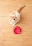 Alimento beging do gato bonito Fotografia de Stock Royalty Free