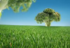 Alimento biológico imagens de stock