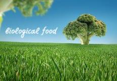Alimento biológico Imágenes de archivo libres de regalías