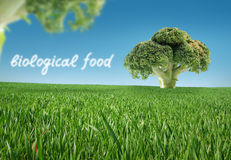 Alimento biológico imagens de stock royalty free