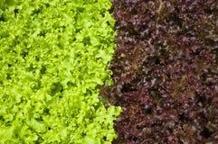 Alimento biológico Fotos de Stock Royalty Free
