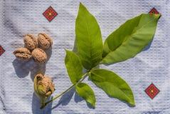 Alimento biológico Foto de Stock