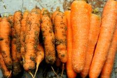 Alimento biológico contra la comida del gmo: zanahorias Imagenes de archivo