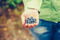 Alimento biológico escolhido fresco do mirtilo na mão da mulher fotos de stock royalty free