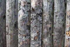 Alimento biológico Tablones de madera grandes, oscuros, viejos con la hierba verde Menú para el restaurante orgánico Fondo para l Imagen de archivo