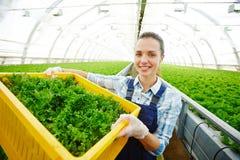 Alimento biologico da vendere Immagini Stock Libere da Diritti