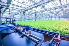 Alimento biologico verde del campo della lattuga in serra moderna Fotografia Stock
