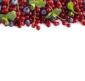 Alimento blu e rosso su un bianco Mirtilli e ribes rosso maturi su un fondo bianco Bacche miste al confine dell'immagine con la c Immagini Stock