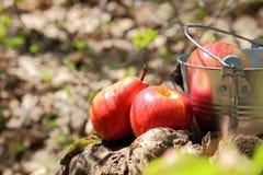 Alimento Colheita Uma cubeta do fruto no jardim no coto a Fotografia de Stock