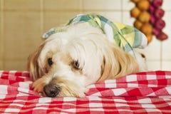 Alimento da espera do cachorrinho foto de stock