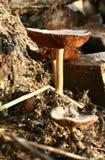 Alimento da floresta Imagens de Stock