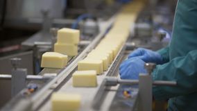 Alimento da produção Processo de manufatura da fábrica de queijo Roda do queijo na linha da fabricação na planta de alimento vídeos de arquivo