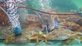Alimento da rua em Ásia, caranguejos em uns aquários no mercado da noite do alimento, dos gourmet e dos restaurantes, pratos exót video estoque