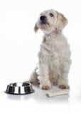 Alimento de espera do cão branco imagem de stock
