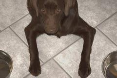 Alimento de espera do cão entre duas bacias Imagens de Stock
