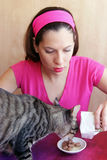 Alimento de gato imagem de stock royalty free
