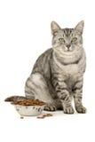 Alimento de gato Fotografia de Stock