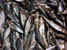 Alimento de mar Fotografía de archivo