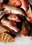 Alimento de mar fresco Imagem de Stock Royalty Free
