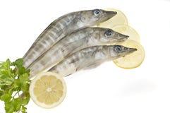 Alimento de mar; pescados foto de archivo libre de regalías