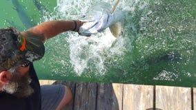 Alimento de peixes imagens de stock