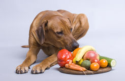 Alimento de perro sano Foto de archivo libre de regalías