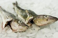 Alimento de pescados de bacalao imagen de archivo libre de regalías