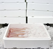 Alimento de pescados en rectángulo Imágenes de archivo libres de regalías