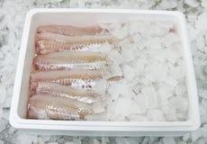 Alimento de pescados en rectángulo imagen de archivo libre de regalías