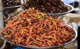 Alimento degli insetti alla Cambogia Immagini Stock