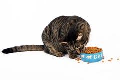 Alimento del amor de los gatos Imagen de archivo libre de regalías