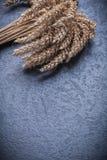 Alimento del copyspace delle orecchie della segale e del grano e concetto della bevanda Immagini Stock