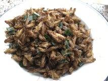 Alimento dell'insetto dello spuntino immagini stock