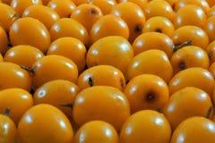 Alimento della bacca dell'olivello spinoso, pianta medicinale ed ornamentale importante fotografia stock libera da diritti