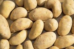 Alimento delle verdure crude delle patate nel mercato per struttura ed il fondo del modello Immagine Stock Libera da Diritti