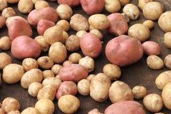 Alimento delle verdure crude delle patate sul licenziamento per la struttura ed il fondo del modello Immagine Stock
