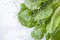 Alimento dello spruzzo delle gocce di acqua della lattuga Immagini Stock Libere da Diritti
